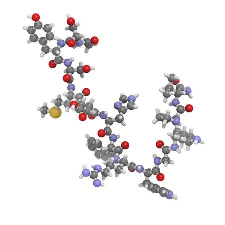 stimulating: Chemical structure of a molecule of melanotropin (melanocyte stimulating hormone, MSH).  Stock Photo