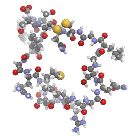 peptide: Chemical structure of a molecule of atrial natriuretic peptide (ANP) or factor (ANF), also called atrial natriuretic hormone (ANH), Cardionatrine, Cardiodilatine (CDD) or atriopeptin. ANP is a peptide hormone that has multiple effects and plays an important role in blood pressure control.  Stock Photo