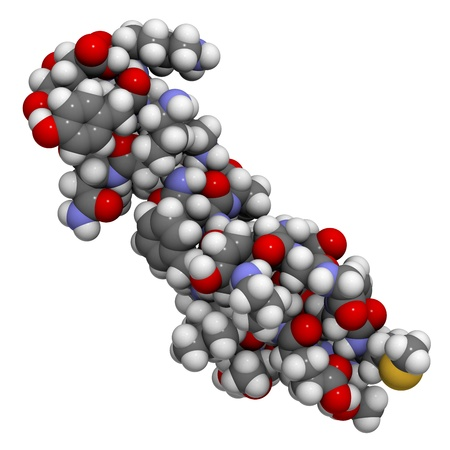 Chemical structure of beta-endorphin. Endorphins are natural opioid neurotransmitter peptides that act like morphine.
