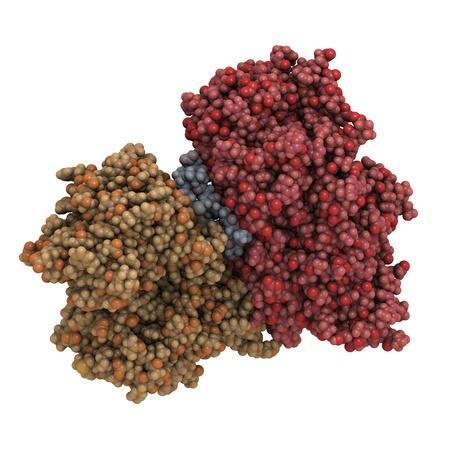 recombinant: Struttura chimica di una molecola del cervello o B peptide natriuretico di tipo (BNP). Una diminuzione dei livelli di questo biomarker indica insufficienza cardiaca. Ricombinante BNP � usato per trattare l'insufficienza cardiaca scompensata.