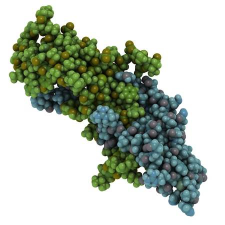 Chemical structure of a molecule of human Follicle-stimulating hormone (FSH). FSH plays an important role in the regulation of development, growth and reproduction. Imagens