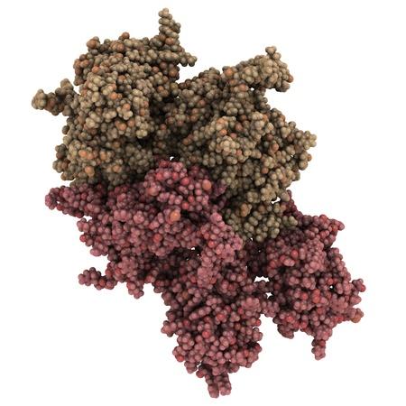 cofactor: Chemical structure of a molecule of coagulation factor VIII (FVIII, anti-hemophilic factor, AHF).