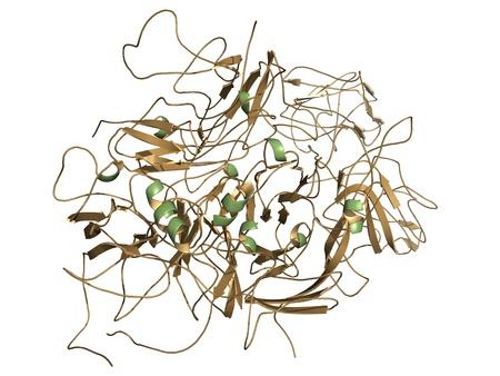 factor: Chemical structure of a molecule of coagulation factor VIII (FVIII, anti-hemophilic factor, AHF).