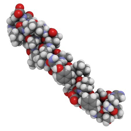 peptide: Chemical structure of a Glucagon-like Peptide 1 (GLP-1) molecule. GLP-1 is being investigated for the treatment of diabetes mellitus. Stock Photo