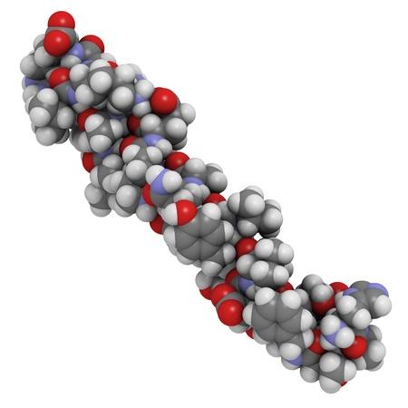 mellitus: Struttura chimica di una glucagone-like peptide 1 (GLP-1) molecola. GLP-1 � studiata per il trattamento del diabete mellito. Archivio Fotografico