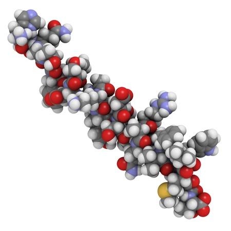 Chemische Struktur eines Moleküls von Glucagon. Glukagon ist ein Peptidhormon, das in der Bauchspeicheldrüse produziert, die den gegenteiligen Effekt von Insulin hat. Standard-Bild - 16083444