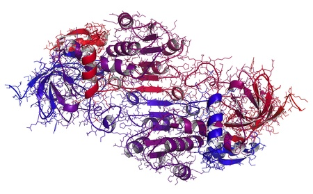 enzyme: Chemical structure of a molecule of human alcohol dehydrogenase b3 (ADH). The ADH enzyme catalyses the breakdown of ethanol to acetaldehyde.  Stock Photo