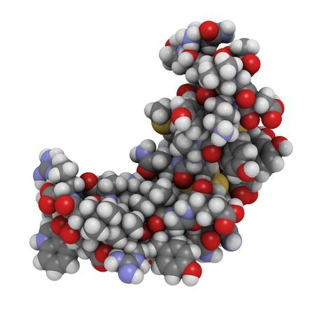 Chemische Struktur des humanen epidermalen Wachstumsfaktors (hEGF). EGF ist ein Wachstumsfaktor, der bei der Bindung an den EGF-Rezeptor, regt das Zellwachstum und Proliferation. Hemmung der EGF-Rezeptor (EGFR) wird verwendet, um einige Formen von Krebs zu behandeln. Standard-Bild - 16077975