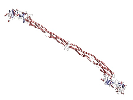 factor: Chemical structure of human fibrinogen (factor I) protein.