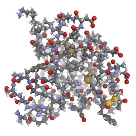 Chemische Struktur eines Moleküls des Insulin-like growth factor (IGF-1, Somatomedin C) Hormon. Beim Menschen IGF-1 stimuliert Wachstum und vermittelt die Wirkungen des Wachstumshormons. IGF-1 wird auch angenommen, dass eine wichtige Rolle bei der Alterung spielen. Standard-Bild - 16083566