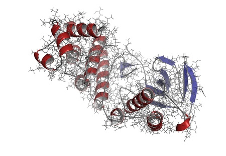 autoimmune: Chemical structure of p38 mitogen-activated protein (MAP) kinase. This protein plays an important role in inflammation and autoimmune disease.
