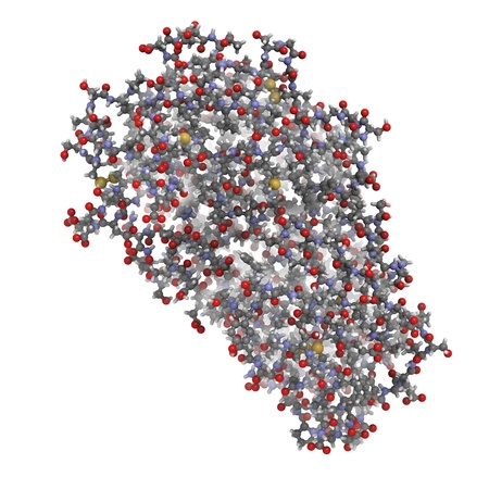 protease: Chemical structure of a pepsin enzyme molecule. Pepsin is a digestive enzyme found in the stomach, where it breaks down food proteins into smaller fragments.