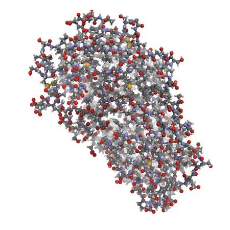 protease: Estructura qu�mica de una mol�cula de la enzima pepsina. La pepsina es una enzima digestiva encontrada en el est�mago, donde se descompone prote�nas de los alimentos en fragmentos m�s peque�os.