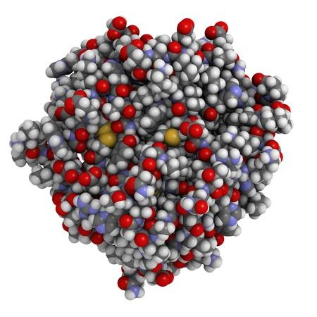 La structure chimique de l'antigène prostatique spécifique (PSA, gamma-seminoprotein, kallikréine-3, KLK3).