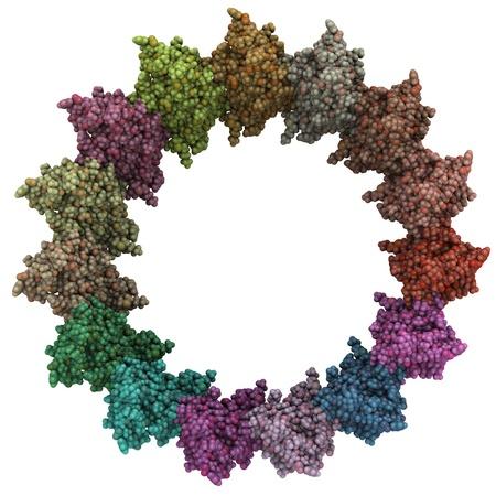 monella: Estructura qu�mica del complejo aguja salmonella (anillo inferior del cuello).