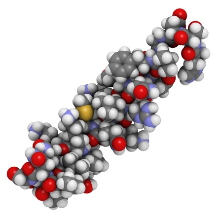 peptide: Chemical structure of the vasoactive intestinal peptide (VIP).  VIP is a peptide that has a number of biological effects in the digestive system but also in the brain and the heart.  Stock Photo