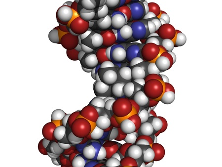mutations: Chemical structure of DNA damaged by light. UV radiation has caused two thymine residues to form a photodimer. Such DNA damage can give rise to mutations and eventually cancer, especially melanoma (skin cancer).  Stock Photo
