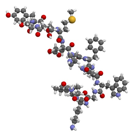 peptide: Chemical structure of a molecule of melanotropin (melanocyte stimulating hormone, MSH). This peptide hormone plays a role in skin pigmentation but appears to be involved in appetite and sexual arousal signalling. Stock Photo
