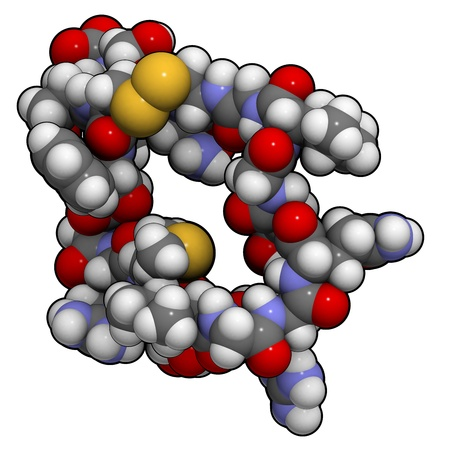 peptide: Chemical structure of a molecule of atrial natriuretic peptide (ANP) or factor (ANF), also called atrial natriuretic hormone (ANH), Cardionatrine, Cardiodilatine (CDD) or atriopeptin. ANP is a peptide hormone that has multiple effects and plays an importa
