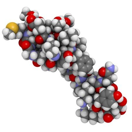 Chemische structuur van beta-endorfine. Endorfines zijn natuurlijke opioïde peptiden neurotransmitter die fungeren als morfine.