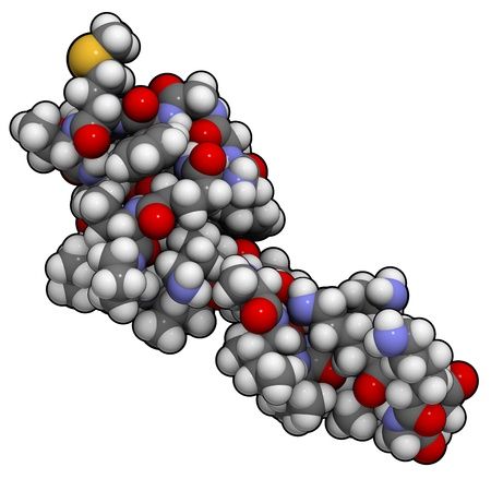 endogenous: Chemical structure of beta-endorphin. Endorphins are natural opioid neurotransmitter peptides that act like morphine.