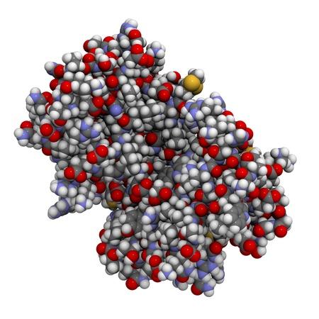 leucemia: Estructura qu�mica de una ADP ribosa c�clica hidrolasa (CD38) de prote�nas. CD38 es una enzima presente en la superficie celular de muchas c�lulas inmunes y es un biomarcador pron�stico usado en el diagn�stico de la leucemia.