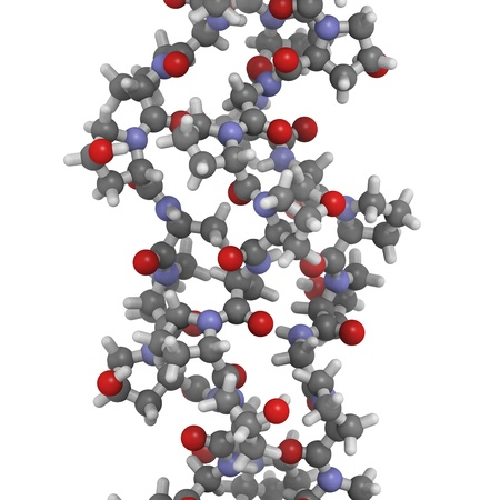 Chemical structure of a collagen model protein. Collagen adopts a characteristic triple helix structure. Collagen is a major component of many tissues, including skin, bone and cartilage. Collagen is used dermal filler in the treatment of wrinkles and ski photo