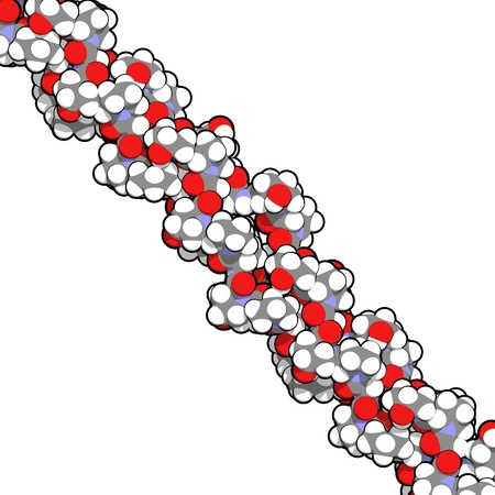 Chemical structure of a collagen model protein. Collagen adopts a characteristic triple helix structure. Collagen is a major component of many tissues, including skin, bone and cartilage. Collagen is used dermal filler in the treatment of wrinkles and ski Stock Photo - 16647733