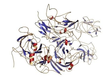 recombinant: Struttura chimica di una molecola di fattore VIII della coagulazione (FVIII, fattore anti-emofiliaco, AHF). La carenza di questa proteina causa l'emofilia A. livelli elevati di questa proteina aumenta il rischio di trombosi venosa profonda (TVP) ed embolia polmonare.