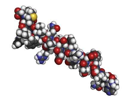 glucagon: Chemical structure of a molecule of glucagon. Glucagon is a peptide hormone, produced in the pancreas, that has the opposite effect of insulin.