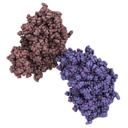 protease: Estructura qu�mica de un memapsina 2 (beta secretasa 1, beta-APP sitio de escisi�n de enzima 1, la aspartil proteasa 2). La escisi�n de la prote�na amiloide precursora (APP) por BACE es un paso esencial en la formaci�n de beta-amiloide, y esto es importante en di Alzheimer