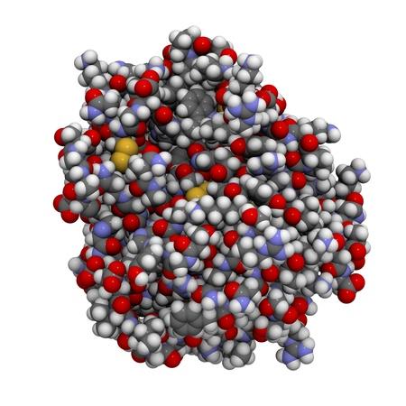 protease: Estructura qu�mica de una mol�cula de enzima tripsina humana. La tripsina es una enzima que contribuye a la digesti�n de prote�nas en el sistema digestivo. Foto de archivo