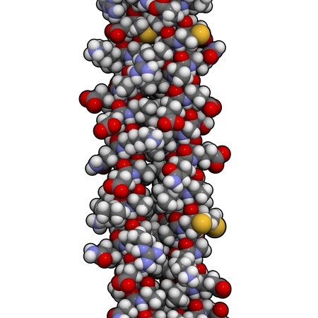 Chemical structure of human keratin intermediate filaments. These are essential structural components of skin, hair and other related tissues.