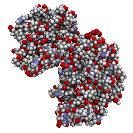 kinase: Chemical structure of p38 mitogen-activated protein (MAP) kinase. This protein plays an important role in inflammation and autoimmune disease.