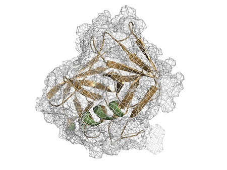 antigen: Chemical structure of prostate-specific antigen (PSA, gamma-seminoprotein, kallikrein-3, KLK3).