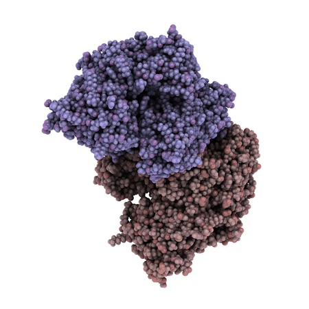 biomarker: Chemical structure of prostate-specific membrane antigen (PSMA, Glutamate carboxypeptidase II). PSMA is both a marker and possible therapeutic target for prostate cancer.