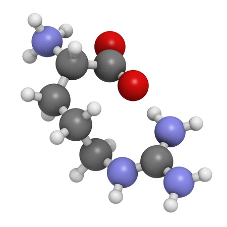 Arginine (Arg, R) amino acid, molecular model. Amino acids are the building blocks of all proteins. Atoms are represented as spheres with conventional color coding: hydrogen (white), carbon (grey), oxygen (red), nitrogen (blue)