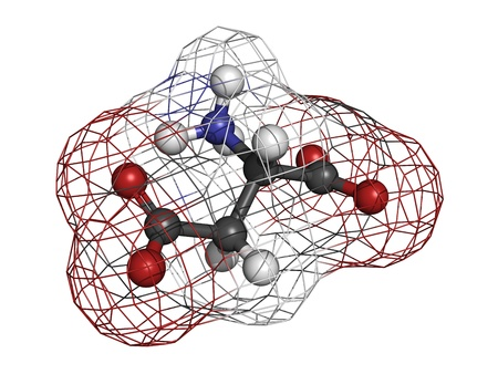 asp: Aspartic acid (Asp, D, aspartate) amino acid, molecular model. Amino acids are the building blocks of all proteins. Atoms are represented as spheres with conventional color coding: hydrogen (white), carbon (grey), oxygen (red), nitrogen (blue)