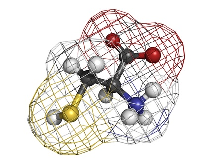 disulfide: Cysteine (Cys, C) amino acid, molecular model. Amino acids are the building blocks of all proteins. Atoms are represented as spheres with conventional color coding: hydrogen (white), carbon (grey), oxygen (red), nitrogen (blue), sulfur (yellow)