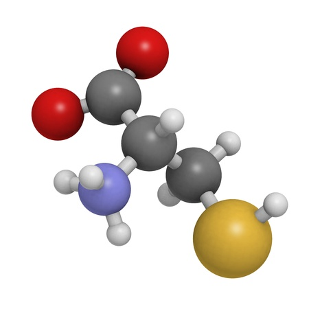 biosynthesis: Cysteine (Cys, C) amino acid, molecular model. Amino acids are the building blocks of all proteins. Atoms are represented as spheres with conventional color coding: hydrogen (white), carbon (grey), oxygen (red), nitrogen (blue), sulfur (yellow)