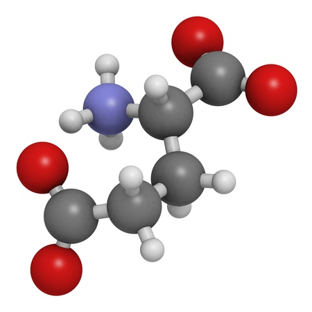 biosynthesis: Glutamic acid (Glu, E, glutamate) amino acid and neurotransmitter, molecular model. Amino acids are the building blocks of all proteins. Glutamate is also responsible for umami flavor. Atoms are represented as spheres with conventional color coding: hydro