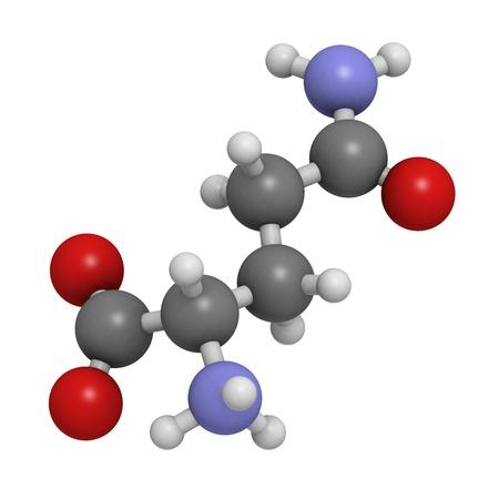 hydrog�ne: Glutamine (Gln, Q) d'acides amin�s, mod�le mol�culaire. Les acides amin�s sont les blocs de construction des prot�ines. Les atomes sont repr�sent�s par des sph�res avec codage couleur classiques: l'hydrog�ne (blanc), le carbone (gris), d'oxyg�ne (rouge), l'azote (en bleu)