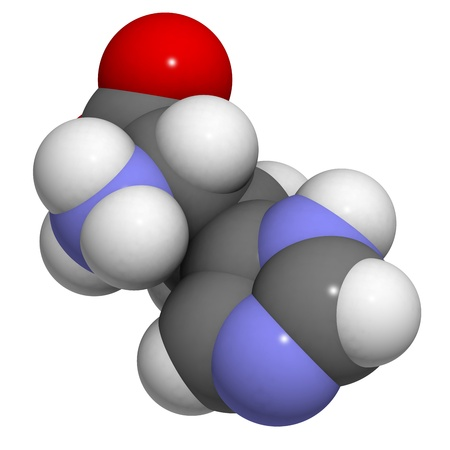 biosynthesis: Histidine (His, H) amino acid, molecular model. Amino acids are the building blocks of all proteins. Atoms are represented as spheres with conventional color coding: hydrogen (white), carbon (grey), oxygen (red), nitrogen (blue)
