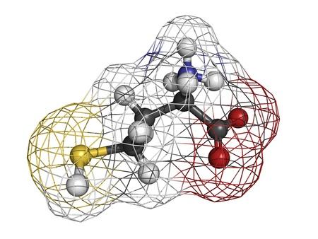 Homocysteïne (Hcy) aminozuur, moleculaire model. Verhoogde bloed homocysteïne niveaus worden geassocieerd met hart-en vaatziekten. Atomen weergegeven als gebieden met conventionele kleurcodering: waterstof (wit), koolstof (grijs), zuurstof (rood), stikstof (blauw),