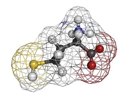 Homocysteine (Hcy) amino acid, molecular model. Elevated blood homocysteine levels are associated with cardiovascular disease. Atoms are represented as spheres with conventional color coding: hydrogen (white), carbon (grey), oxygen (red), nitrogen (blue), Stock Photo