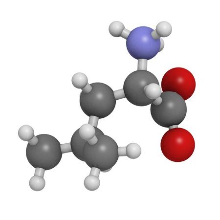 leu: Leucina (Leu, L) aminoacido, modello molecolare. Gli aminoacidi sono i mattoni di tutte le proteine. Gli atomi sono rappresentati come sfere con codifica a colori convenzionali: idrogeno (bianco), il carbonio (grigio), ossigeno (rosso), azoto (blu)