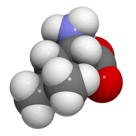 leu: Leucine (Leu, L) amino acid, molecular model. Amino acids are the building blocks of all proteins. Atoms are represented as spheres with conventional color coding: hydrogen (white), carbon (grey), oxygen (red), nitrogen (blue)