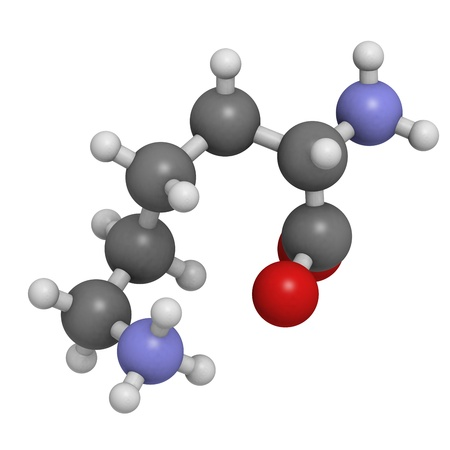 Lysine (Lys, K) amino acid, molecular model. Amino acids are the building blocks of all proteins. Atoms are represented as spheres with conventional color coding: hydrogen (white), carbon (grey), oxygen (red), nitrogen (blue) Stock Photo - 18016529