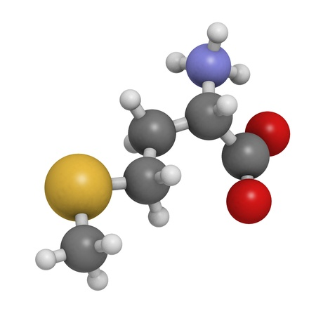 biosynthesis: Methionine (Met, M) amino acid, molecular model. Amino acids are the building blocks of all proteins. Atoms are represented as spheres with conventional color coding: hydrogen (white), carbon (grey), oxygen (red), nitrogen (blue), sulfur (yellow) Stock Photo