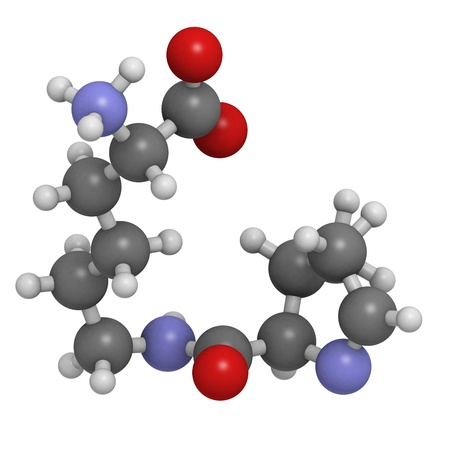 biosynthesis: Pyrrolysine (Pyl, O) amino acid, molecular model. Amino acids are the building blocks of all proteins. Atoms are represented as spheres with conventional color coding: hydrogen (white), carbon (grey), oxygen (red), nitrogen (blue)